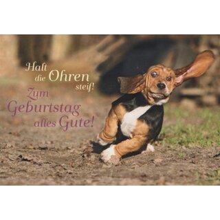 Lustige Geburtstagskarte Halt Die Ohren Steif Hund Rennt